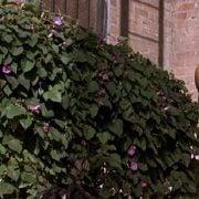 Ryan Reynolds desnudo en una escena de la comedia 'Van Wilder'