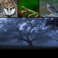 El bosque ibérico