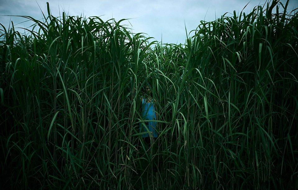 En la hierba alta, fotograma 2 de 7