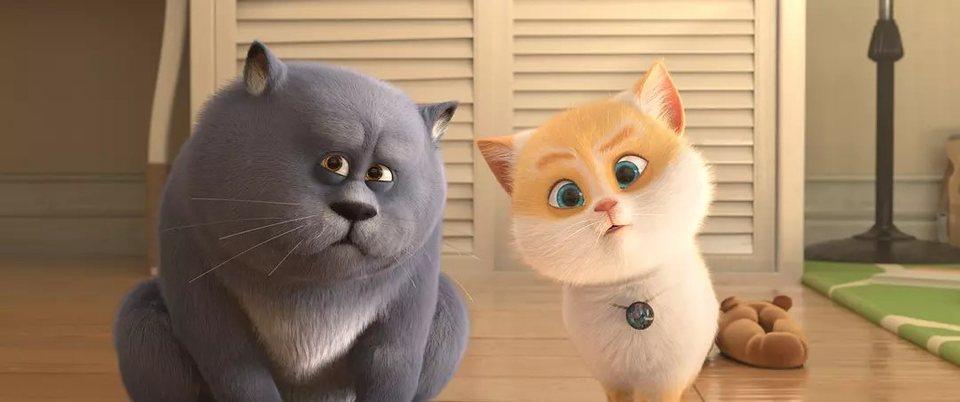 Gatos, fotograma 16 de 18
