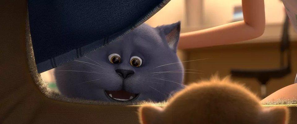 Gatos, fotograma 4 de 18
