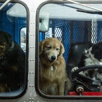 Como perros y gatos 3: Patas unidas