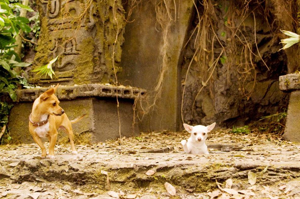 Un Chihuahua en Beverly Hills, fotograma 7 de 18