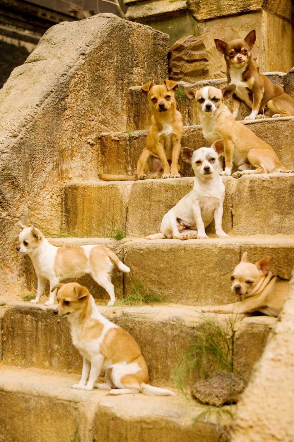 Un Chihuahua en Beverly Hills, fotograma 8 de 18