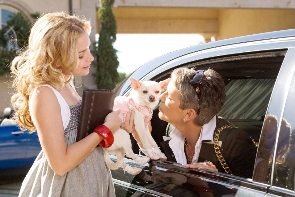 Un Chihuahua en Beverly Hills, fotograma 16 de 18