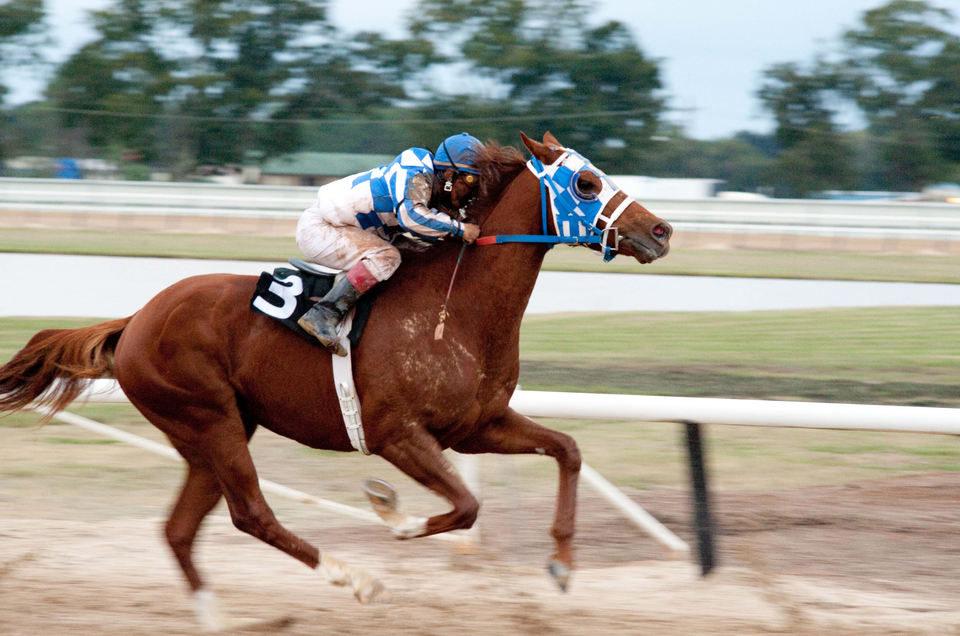 Campeón (Secretariat), fotograma 2 de 29