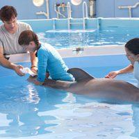 La gran aventura de Winter el delfín