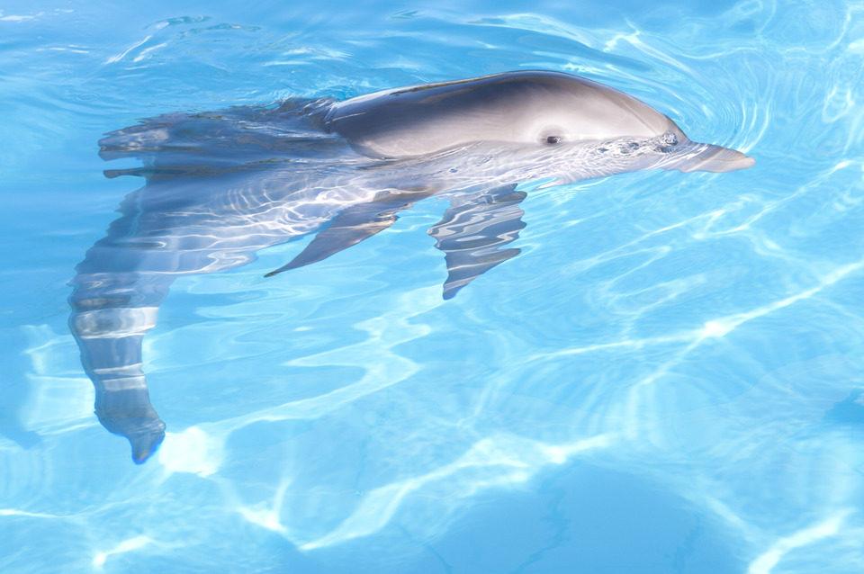 La gran aventura de Winter el delfín, fotograma 9 de 33