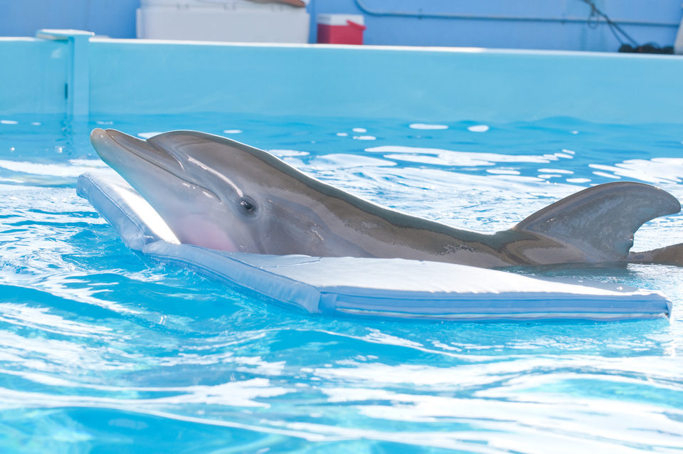 La gran aventura de Winter el delfín, fotograma 16 de 33