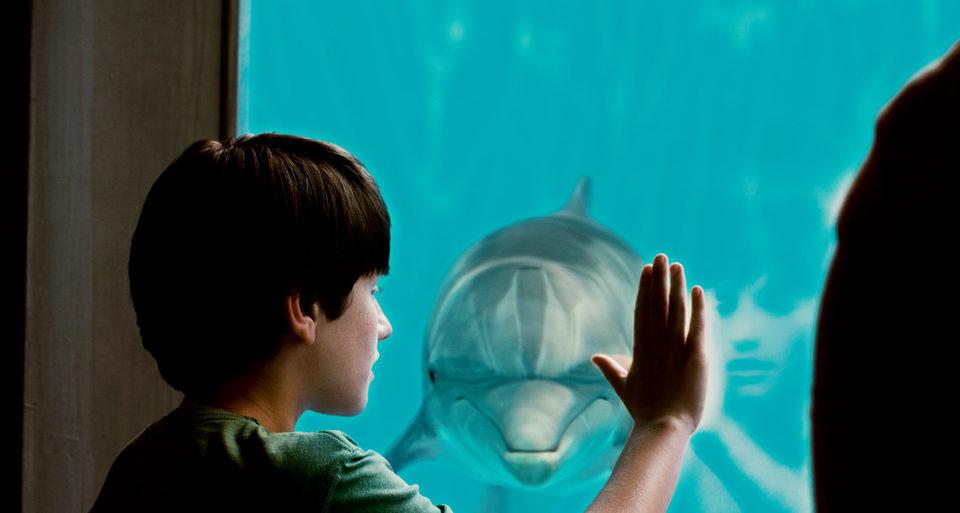 La gran aventura de Winter el delfín, fotograma 28 de 33