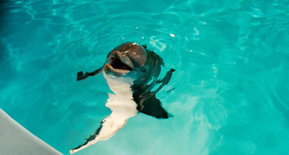 La gran aventura de Winter el delfín, fotograma 29 de 33