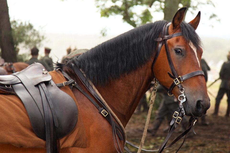 War Horse (Caballo de batalla), fotograma 39 de 74
