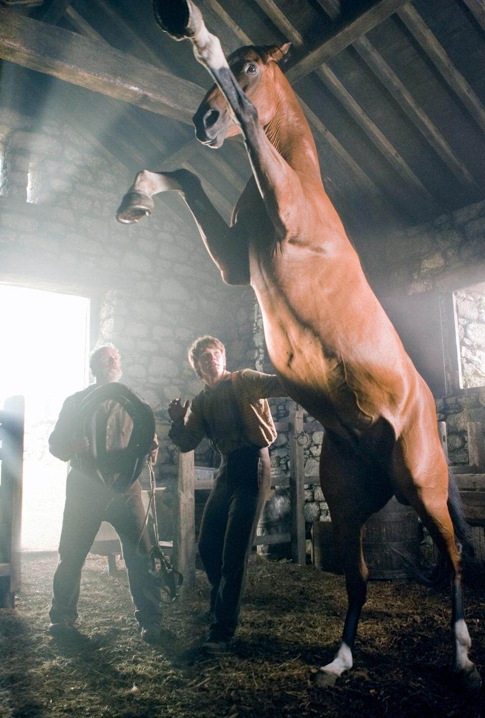 War Horse (Caballo de batalla), fotograma 40 de 74