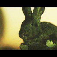 Mujer conejo