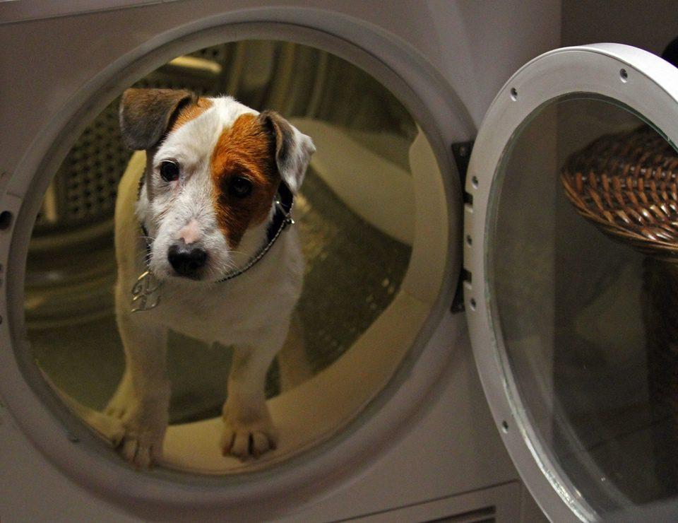 Pancho, el perro millonario, fotograma 16 de 20