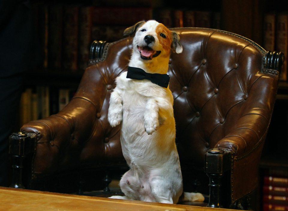 Pancho, el perro millonario, fotograma 14 de 20