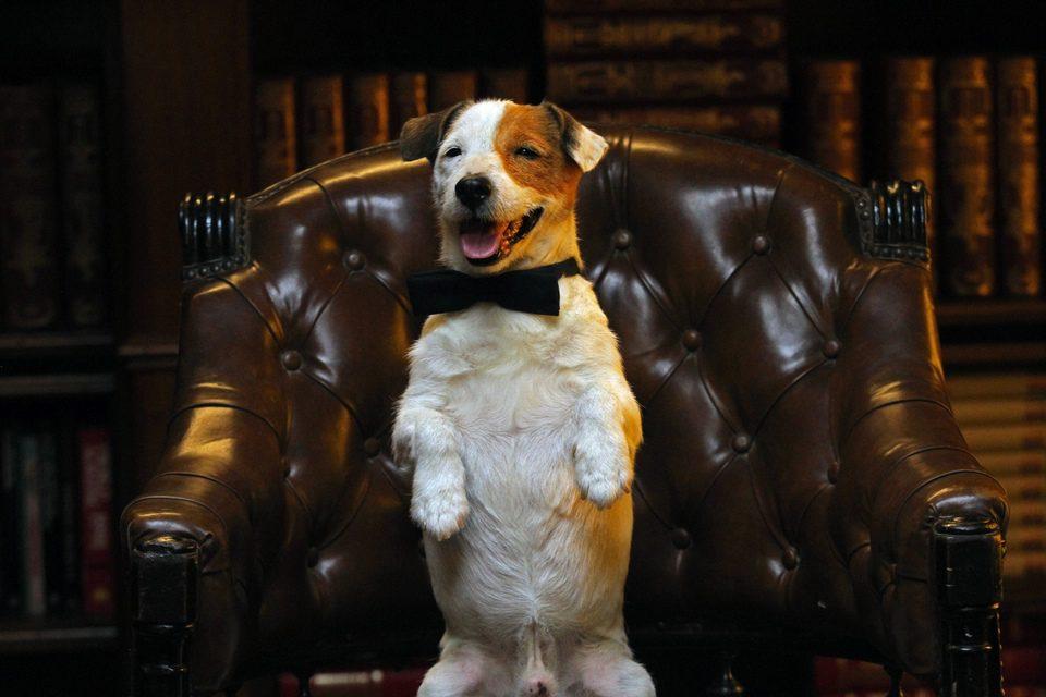 Pancho, el perro millonario, fotograma 12 de 20