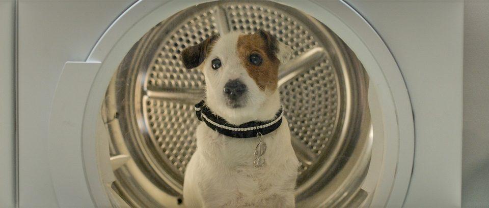 Pancho, el perro millonario, fotograma 8 de 20