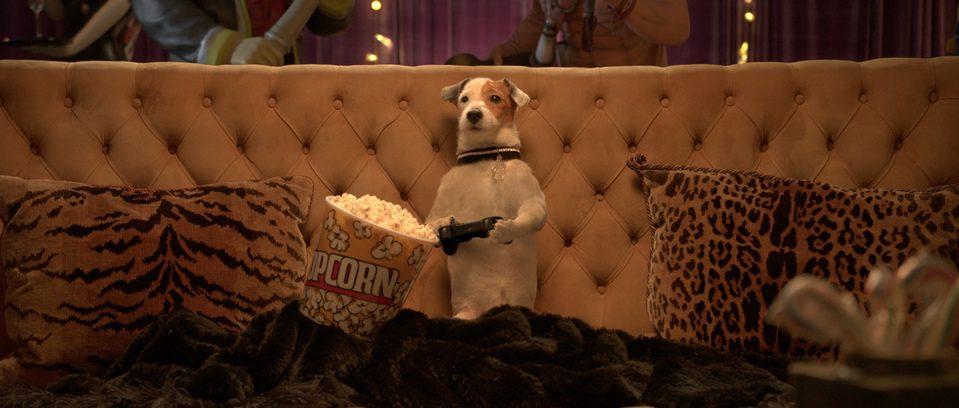 Pancho, el perro millonario, fotograma 6 de 20