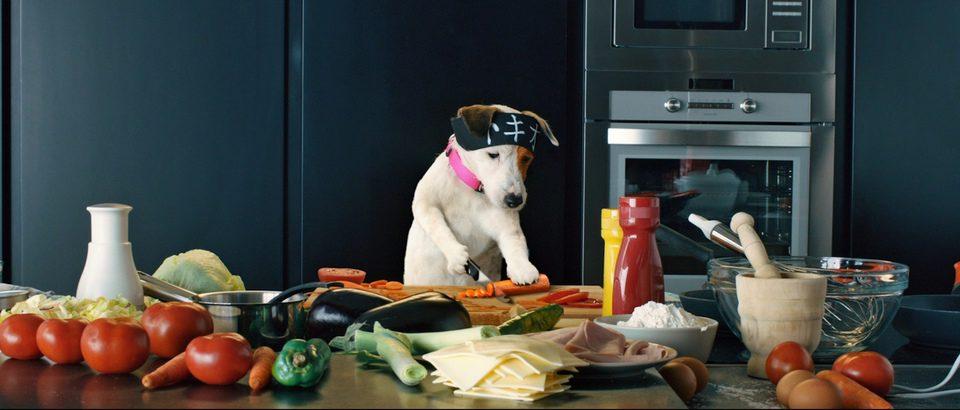 Pancho, el perro millonario, fotograma 3 de 20