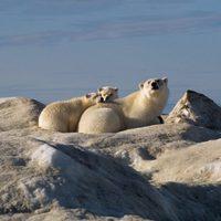Los reyes del Ártico