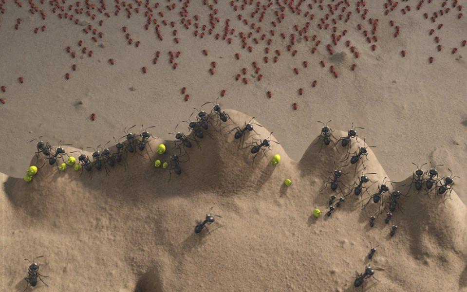 Minúsculos: El valle de las hormigas perdidas, fotograma 14 de 24