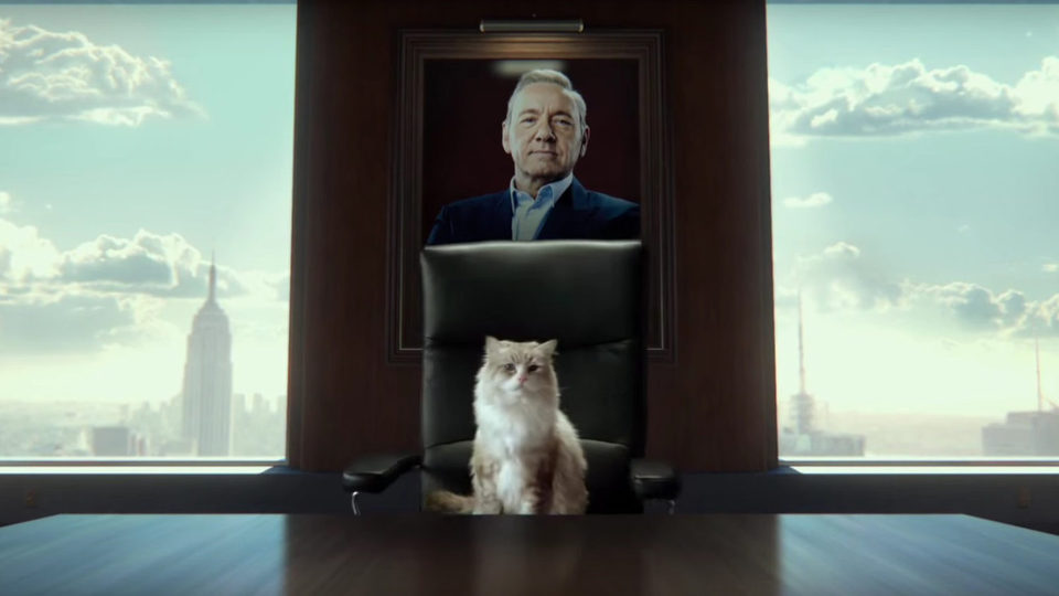 Siete vidas, este gato es un peligro, fotograma 4 de 12