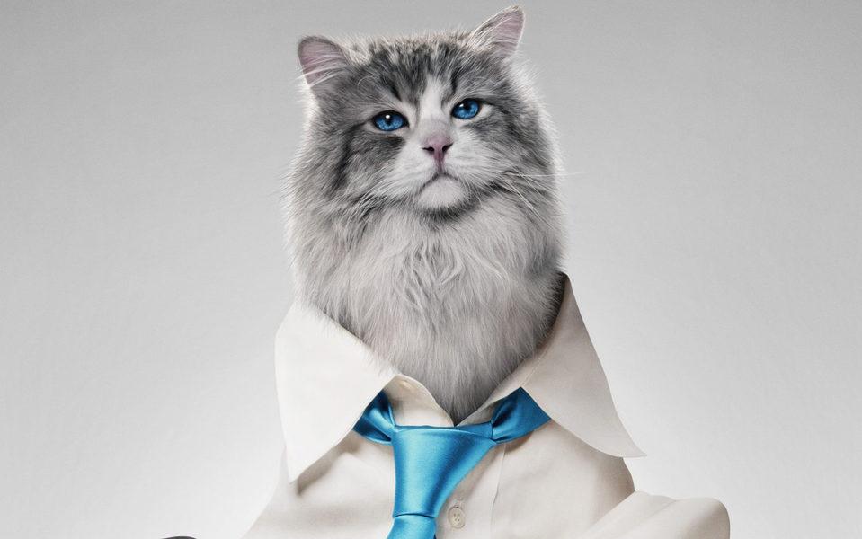Siete vidas, este gato es un peligro, fotograma 1 de 12
