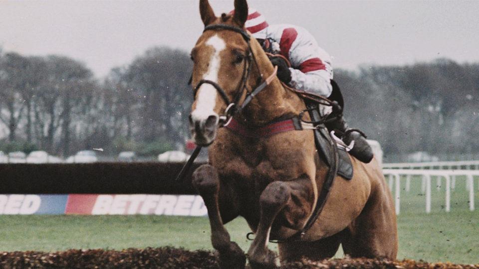 Caballo ganador (Dark Horse), fotograma 6 de 8