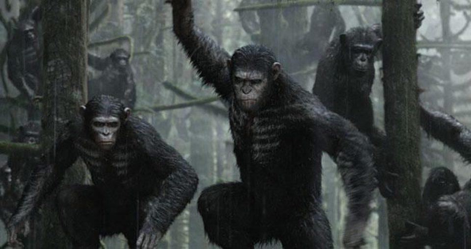 La guerra del planeta de los simios, fotograma 6 de 34