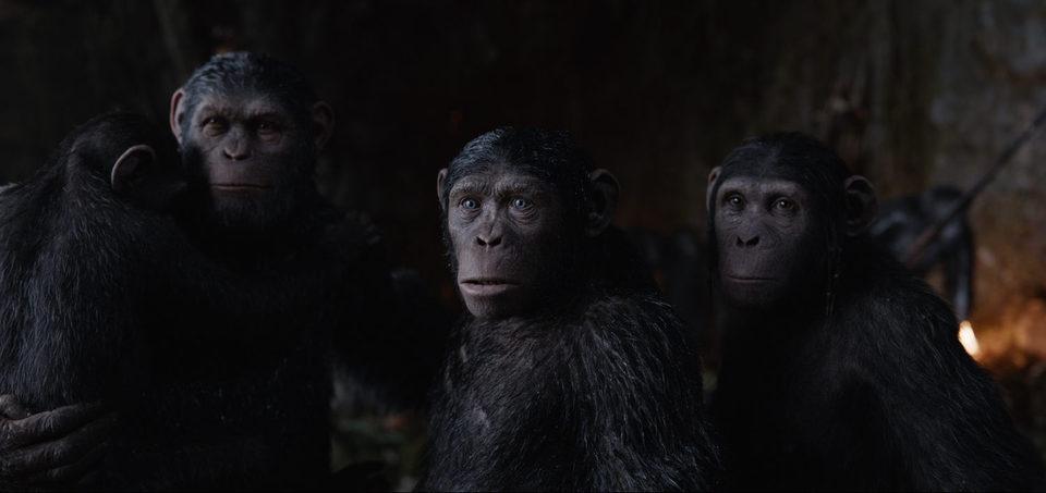 La guerra del planeta de los simios, fotograma 25 de 34