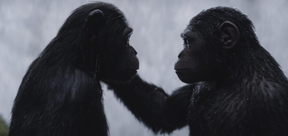 La guerra del planeta de los simios, fotograma 24 de 34