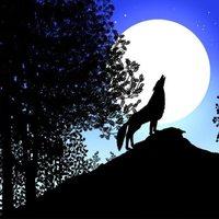 Los cuentos de la noche