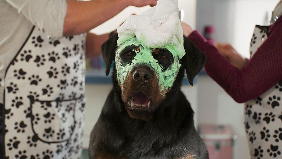 Superagente canino, fotograma 1 de 5