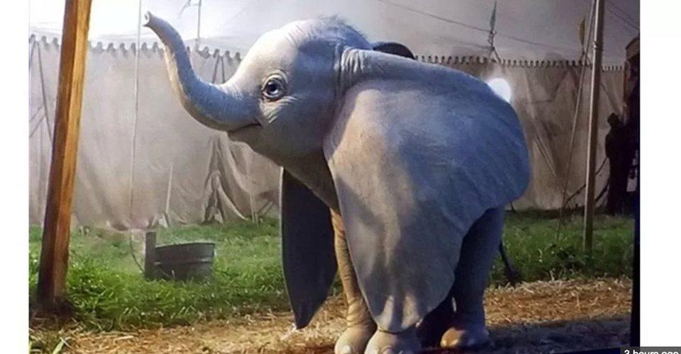 Dumbo, fotograma 1 de 17