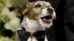 Uggie, el perro de 'The Artist', dejará las huellas de sus patas frente al Teatro Chino Grauman de Hollywood