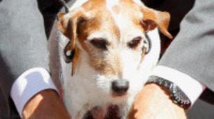 El perro Uggie ya ha marcado sus huellas a las puertas del Teatro Chino Grauman de Hollywood