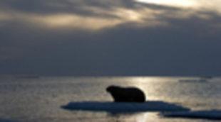 Cartel en castellano de 'Los reyes del Ártico'