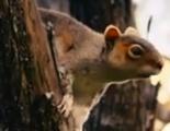 Primer vistazo a 'Squirrels', las ardillas asesinas de Timur Bekmambetov