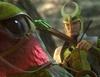 'Epic: El mundo secreto': Espectacular en lo visual pero con anemia de carisma
