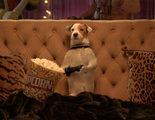 'Pancho, el perro millonario': La peli de Pancho con media ración de Pancho