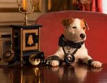 Películas protagonizadas por perros: Cuando la mascota se convierte en la estrella