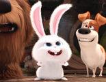 'Mascotas' presenta en un nuevo tráiler a Snowball, su psicópata líder