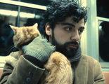 7 razones por las que debes amar a Oscar Isaac