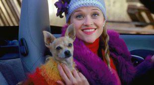 Muere el perrito chihuahua de 'Una rubia muy legal'