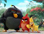 Cristina Castaño, Álex de la Iglesia y Santiago Segura doblarán 'Angry Birds. La película'