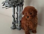 La adorable perrita de Jacob Tremblay se llama Rey ('Star Wars')