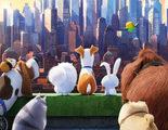 'Mascotas' estrena nuevo y divertidísimo tráiler