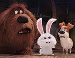 Según las previsiones 'Mascotas' superará en taquilla a 'Buscando a Dory' en su primer fin de semana