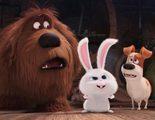 Sorteamos 10 entradas dobles para la premiere de 'Mascotas'